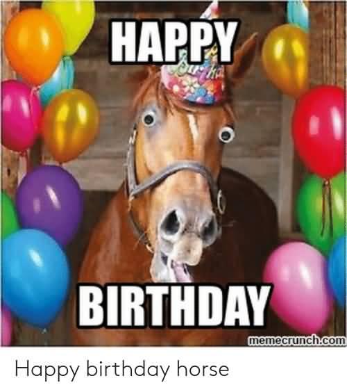 Funny Horse Birthday Happy Birthday Horse Meme