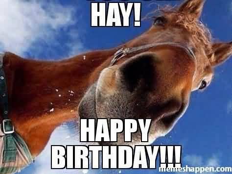 Hay Happy Horse Happy Birthday Horse Meme