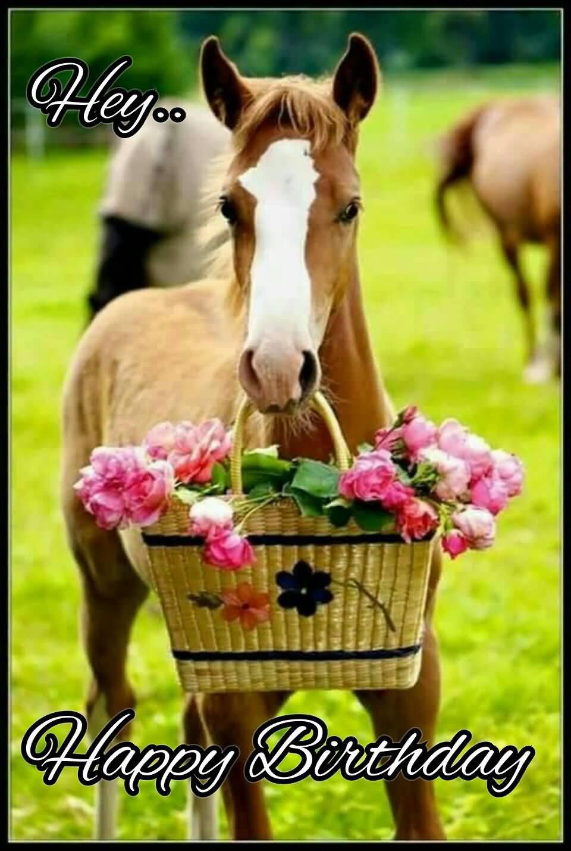 Hey Happy Birthday Happy Birthday Horse Meme