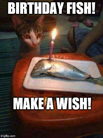 Make A Wish Happy Birthday Fishing Meme