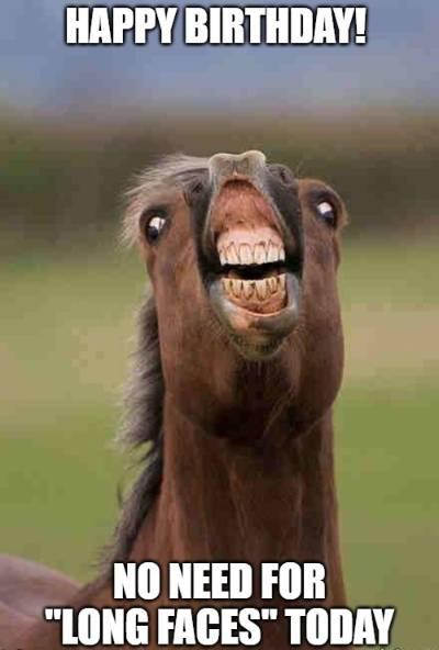 No Need For Happy Birthday Horse Meme