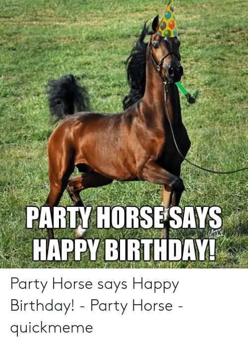 Party Horses Says Happy Birthday Horse Meme