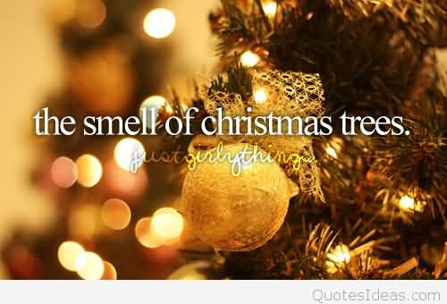 The Smell Of Christmas Christmas Tree Quotes