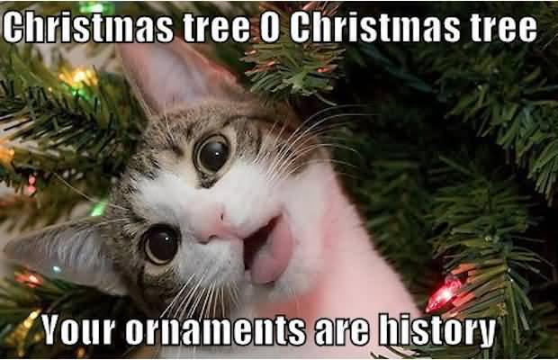 Christmas Tree 0 Christmas Christmas Memes