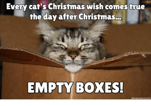 Every Cat's Christmas Wish Day After Christmas Meme