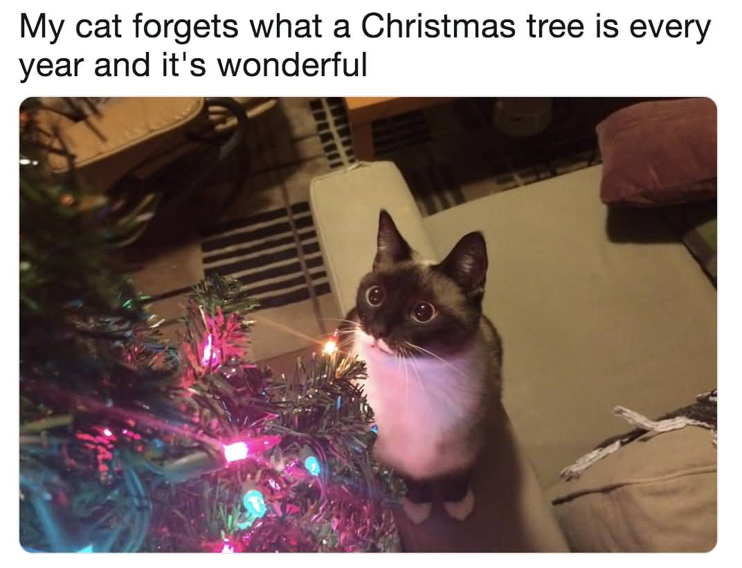 My Cat Forgets What Christmas Memes