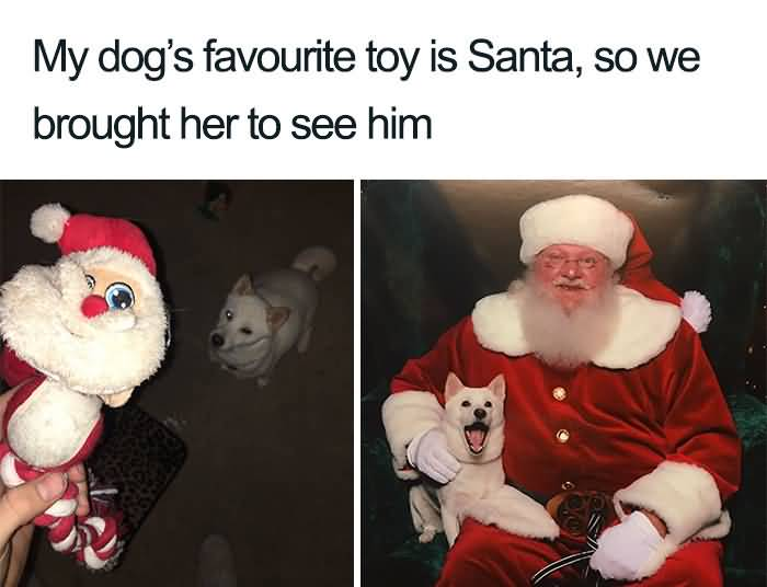 My Dog's Favourite Toy Christmas Memes