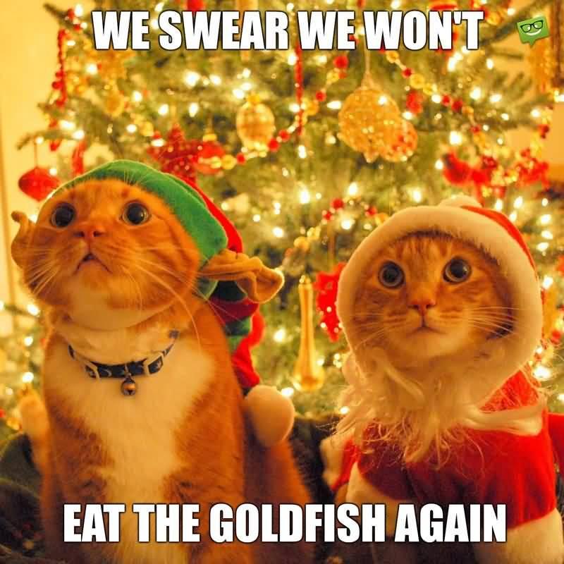 We Swear We Won't Christmas Memes